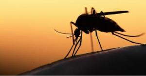 Stay alert to vector-borne disease threats this summer